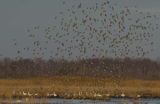 2-10-2008-heron-sand-storm_8669.jpg