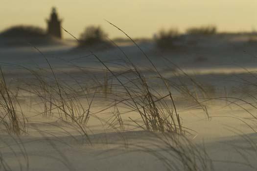 2-10-2008-heron-sand-storm_8788copy1.jpg