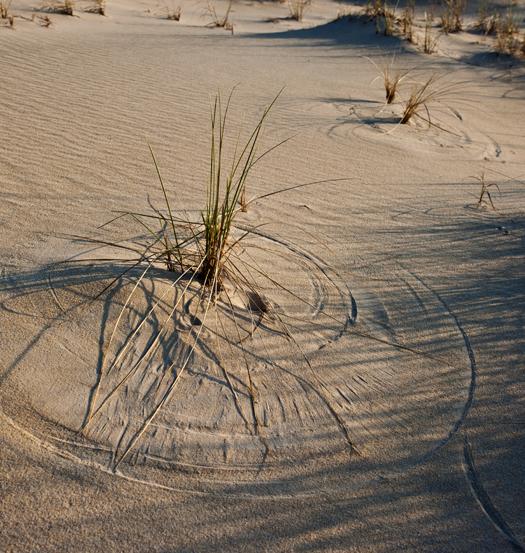 Cape Dunes Sunrise 4.28.2013_6526
