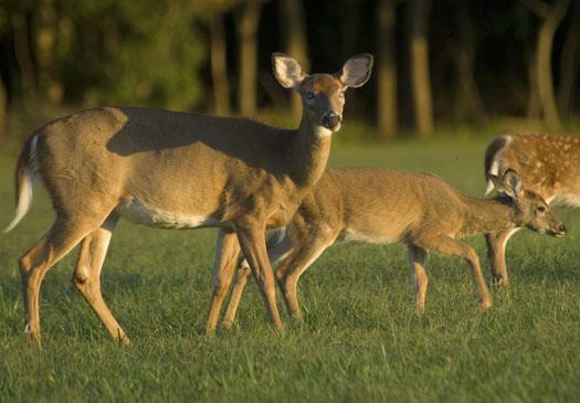 Deer Cape H 2.29.2009_092909_6836