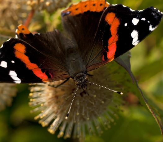 Dragonflies. Butterflies 6.27