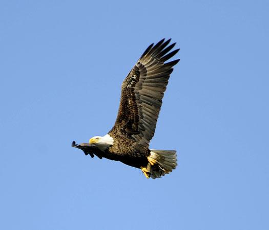 Eagles 12.6.09_120609_7969
