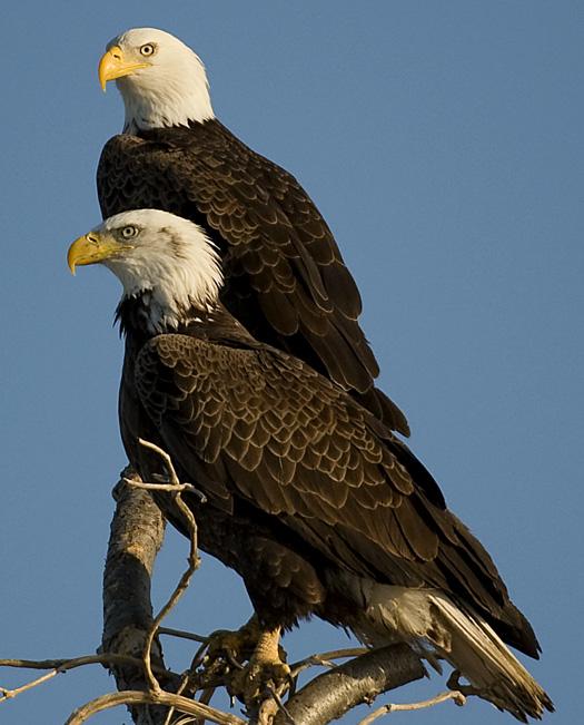 Eagles 2.21.2010_022110_2154