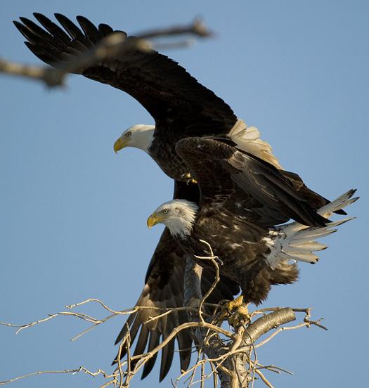 Eagles 2.21.2010_022110_2171