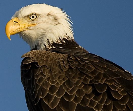 Eagles 2.21.2010_022110_2228