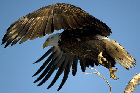 Eagles 2.21.2010_022110_2232.1