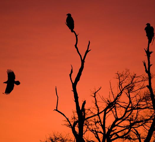 Eagles Sunrise 12.30.2009_123009_9062