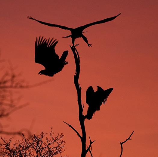 Eagles Sunrise 12.30.2009_123009_9070