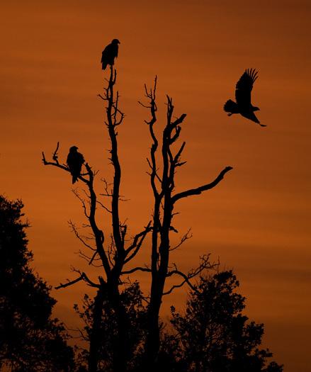 Eagles Sunrise 12.30.2009_123009_9110