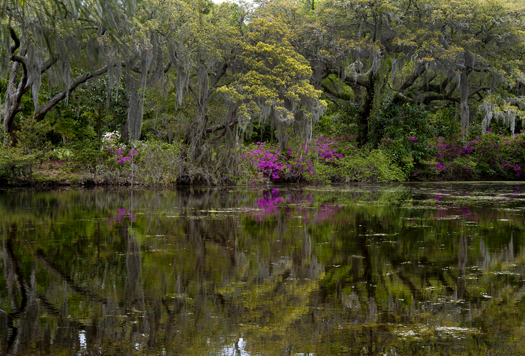 Easter Wilm NC 2014_6190
