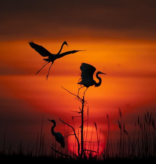 Egret Sunrise 6.12