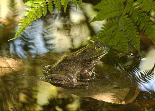 Frog 10.5.2013_0789