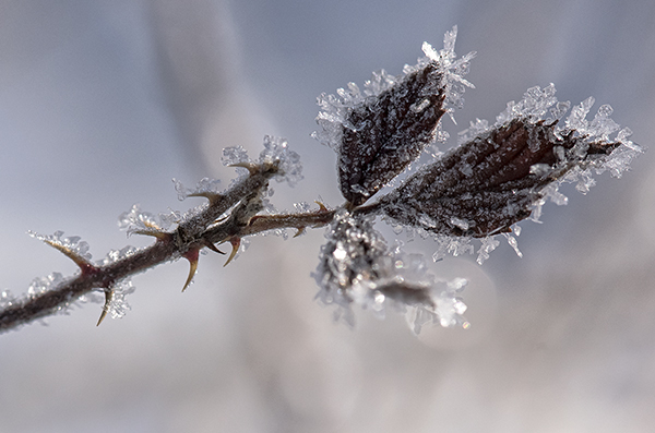 FrostLewes3.7.2015_1812