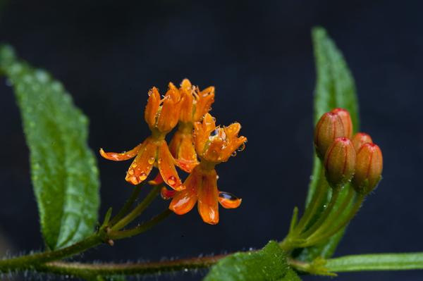 Garden Flowers 8.2.2014_4607