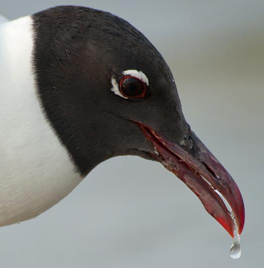 Gulls 2   6.20.2