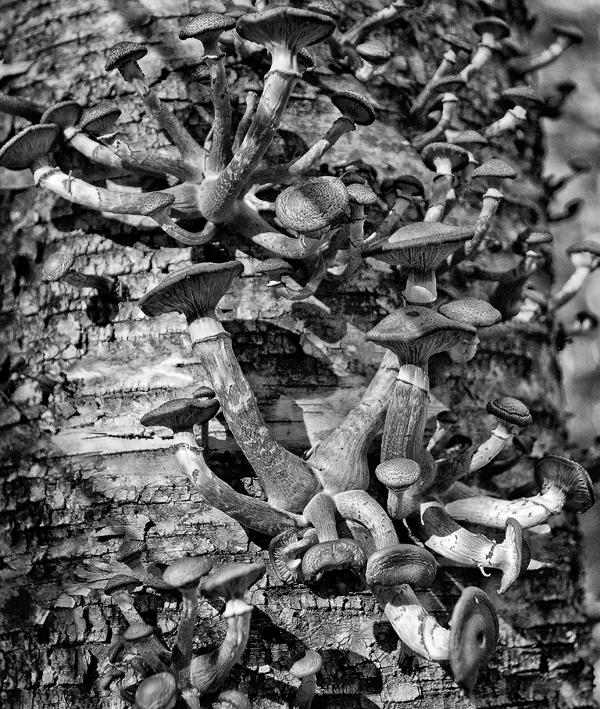 Hancock Brook . Woods Walk 10.9.2011_9050