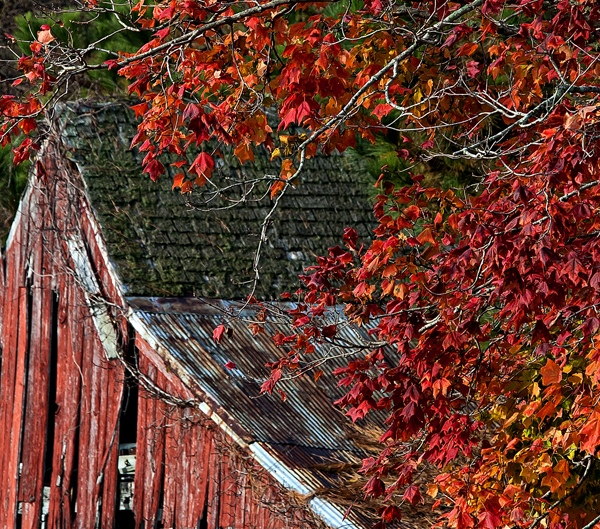 Hp Sunrise.FallColorsPonds.Tree.11.11.2014_9300