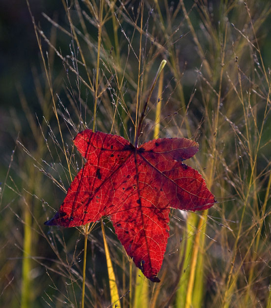 Morning Leaves 11-1-2008_110108_0612