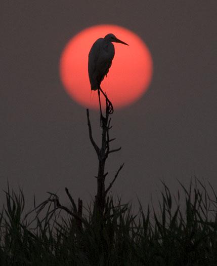 Rookery Sunrise 7-18-2008_071808_6711