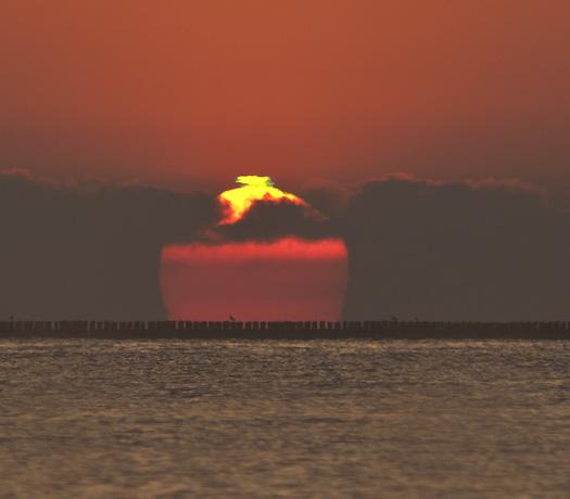 Shorebirds Prine Hook Beach 5.27.2014_7632