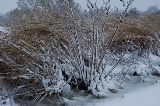 Snowstorm 12.19.2009_121909_8200