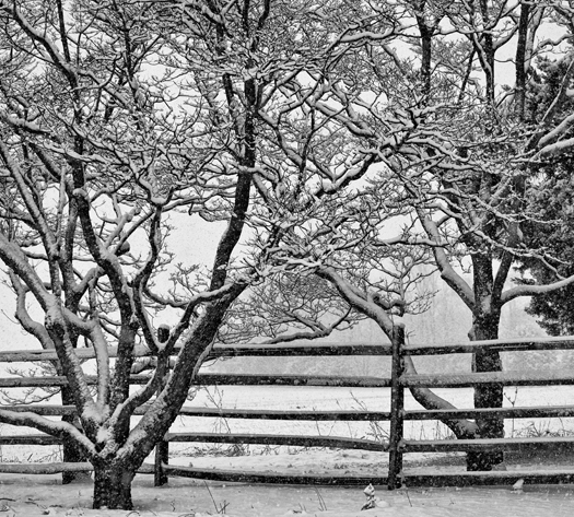 Snowstorm Dover 2.1.2013_4630