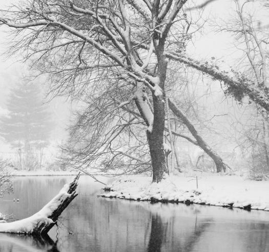 Snowstorm Dover 2.1.2013_4683