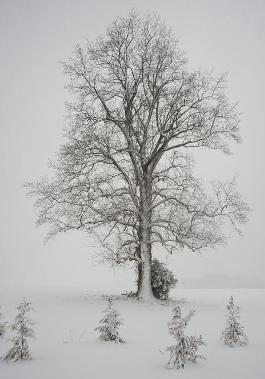 Snowstorm Lewes 3.25.2914_4956