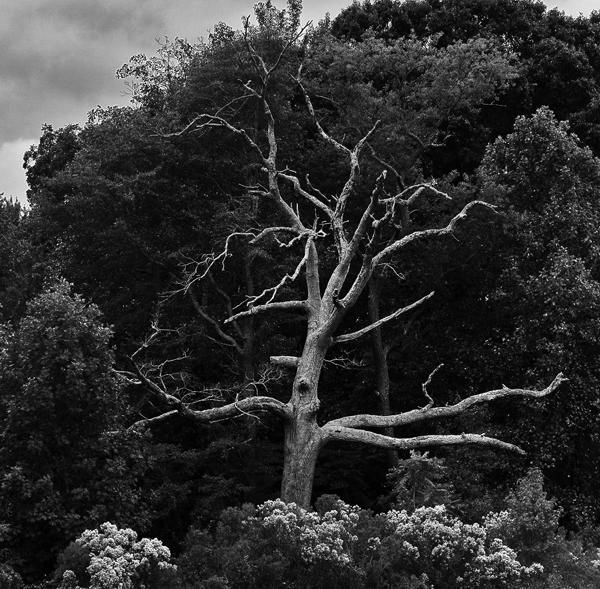 Tree.Goldenrod 10.2.2014_6726