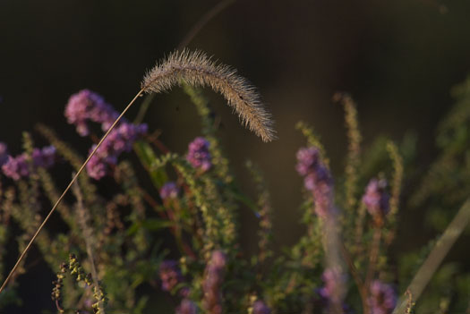 Wildflowers 10.6.2009_100609_7148