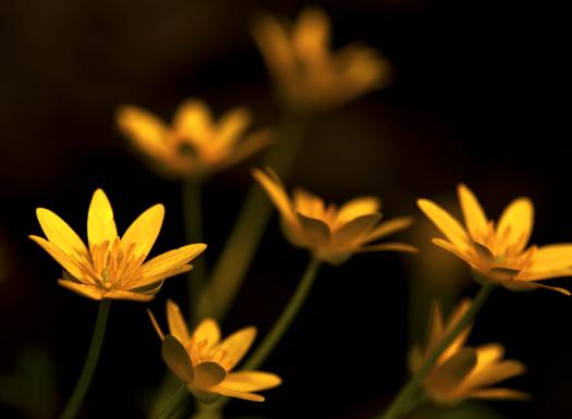 Yellow Wildflowers 4.10.013_5955