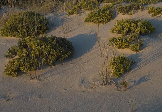 beach-heather-5-20-2009_052009_9667