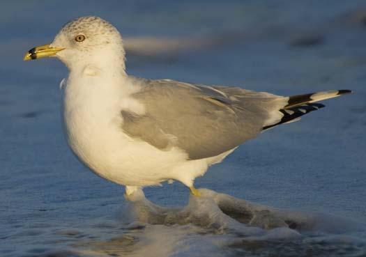 cape-sunset-gulls-sanderlings-3-1-2008_8989copy1.jpg