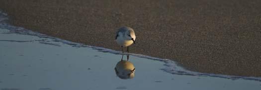 cape-sunset-gulls-sanderlings-3-1-2008_9029copy1.jpg