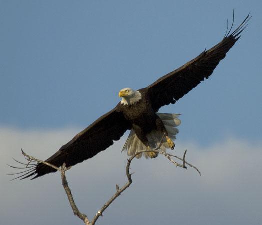 eagle-fox-heron-moon-4-9-2009_040909_6837