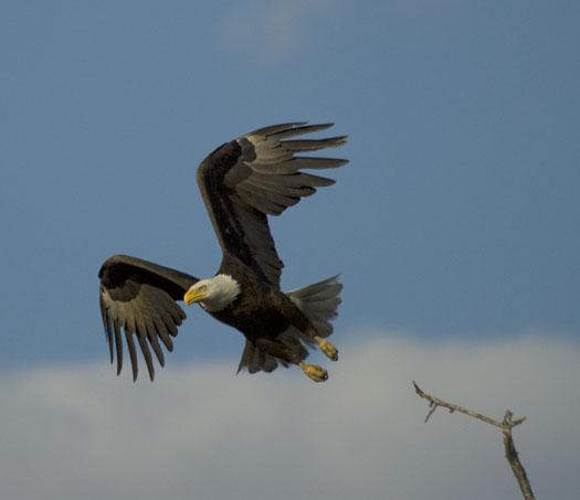 eagle-fox-heron-moon-4-9-2009_040909_6838