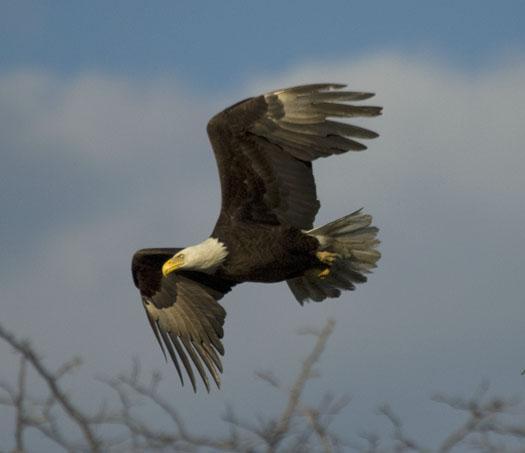 eagle-fox-heron-moon-4-9-2009_040909_6840