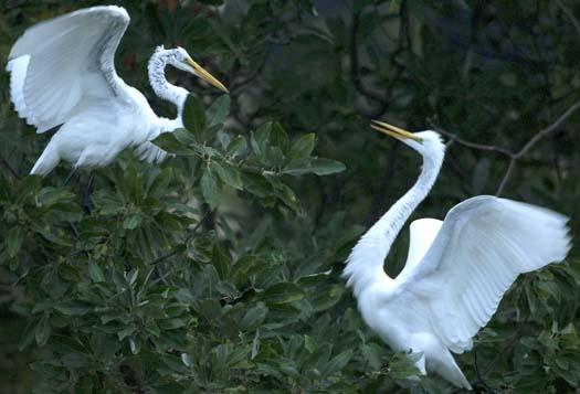 egret-roost-9-13-2008_091308_9114.jpg