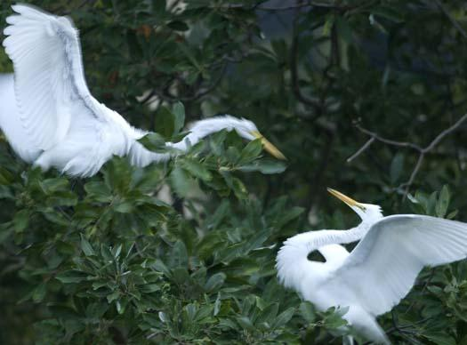 egret-roost-9-13-2008_091308_9122.jpg