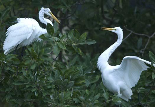 egret-roost-9-13-2008_091308_9150.jpg