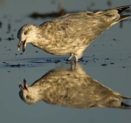 egrets-cormorant-9-7-2008_090708_8926.jpg