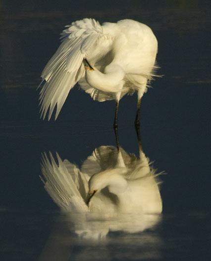 egrets-sunset-6-23-2009_062309_2681