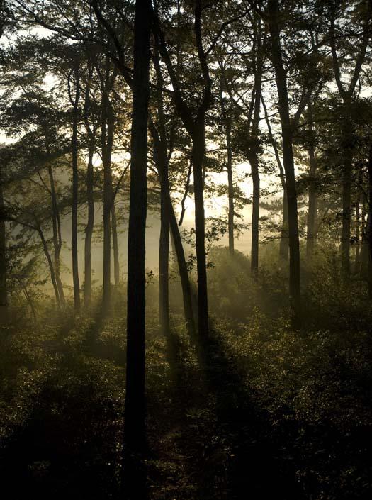 foggy-sunrise-9-5-2008_090508_8813.jpg