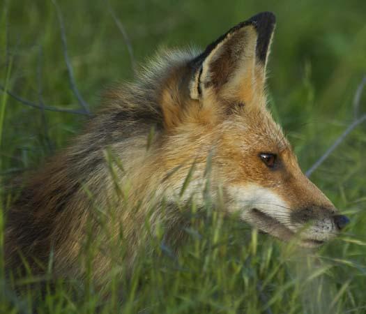 fox-5-5-2008_050508_6477.jpg