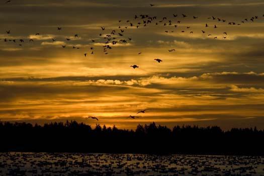 great-sunrise-broadkill-s-geese-heron-11-30-2007_2506copy1.jpg