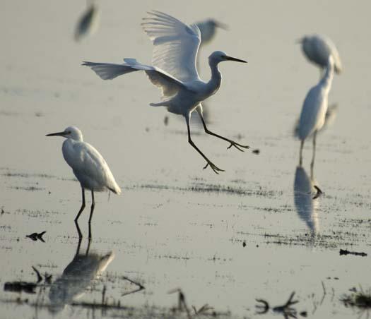 heron-egrets-8-16-2008_081608_8300.jpg