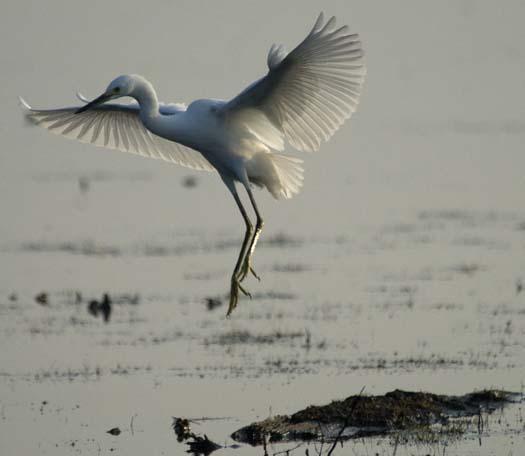 heron-egrets-8-16-2008_081608_8309.jpg