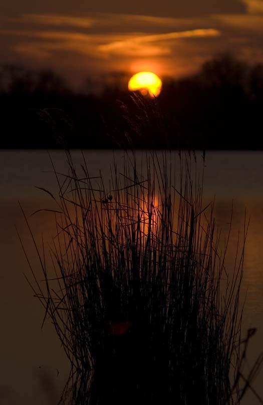 merganser-sunset-12-14-2007_3511copy1.jpg