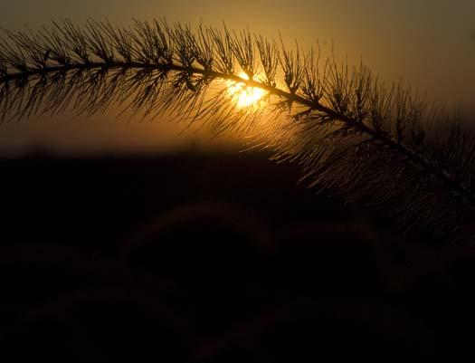 morning-leaves-11-1-2008_110108_0511.jpg