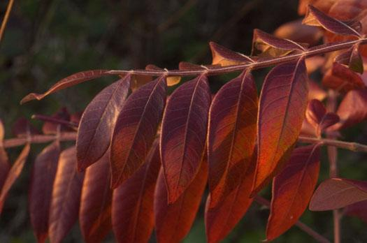morning-leaves-11-1-2008_110108_0518.jpg
